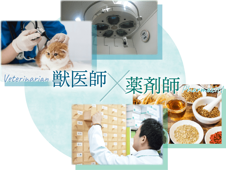 獣医師×薬剤師